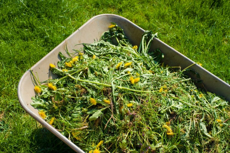 Can Your Lawn Mower Spread Weeds